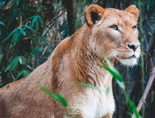 Cultivating Your Lioness Pride